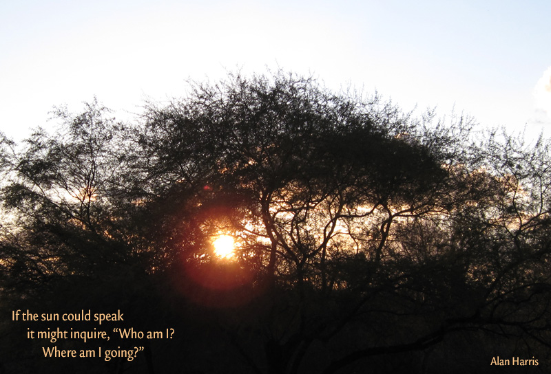 haiga, if the sun could speak